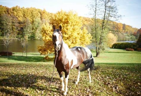 Лошадь в загородном отеле ГРУМАНТ Resort & SPA, недалеко от Москвы, Тульская область