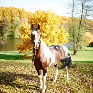 Лошадь в загородном отеле ГРУМАНТ Resort & SPA, недалеко от Москвы, Тула, д. Грумант