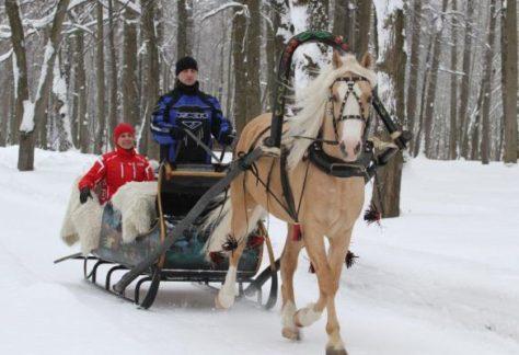 Катание на санях с лошадьми, зимний активный отдых в загородном отеле ГРУМАНТ Resort & SPA, недалеко от Москвы, Тула